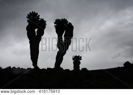 Black And White Minimalistic African Landscape. Bizarre Silhouettes Of Trees Against The Sky