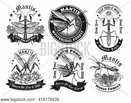 Retro Label Designs With Mantis Vector Illustration Set. Vintage Badges With Flying Predator Bug. In