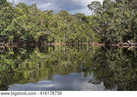Group Of Wood And Branches Floating On The River Late Afternoon In Canaima National Park, Bolivar St