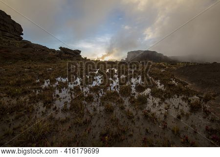 Wild Landscape At The Top Of Mount Roraima With Fog Early In The Morning. Endemic Plants And Water A