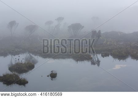 Landscape Of Water And Reflections Of Endemic Plants And Flowers At The Summit Of Mount Roraima Tepu