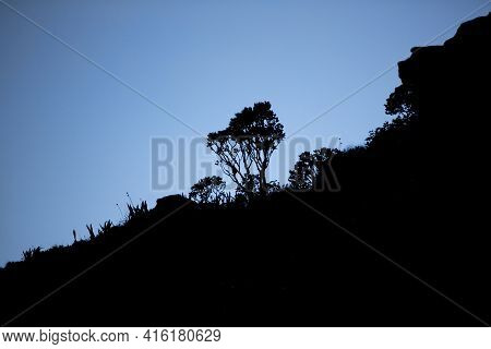 Backlit Of Endemic Plants And Vegetation On Top Of The Roraima Tepui, Gran Sabana. Venezuela 2015.