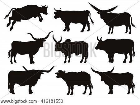 Chicken Breeding. Animal Husbandry. Livestock. Vector Sketch On A White Background