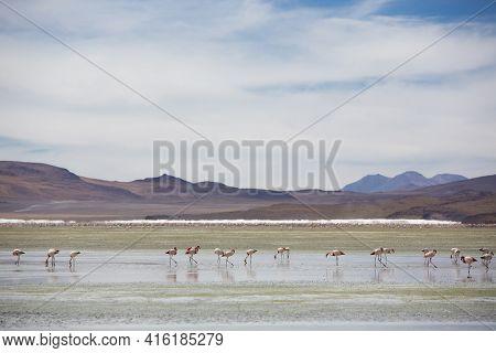 Group Of Pink Flamingos Standing On A Lake Close To The Eduardo Avaroa National Park In Bolivia