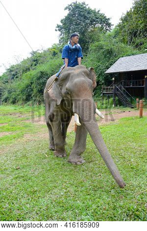 CHIANG RAI, THAILAND - JANUARY 7, 2017: A Mahout and atop his elephant. At the Anantara Golden Triangle Elephant Camp, a charity designed to help elephants and their handlers.