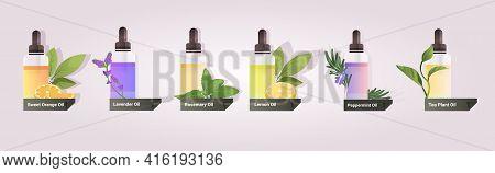 Set Dropping Essential Lemon Peppermint Tea Plant Orange Lavender Rosemary Oil Glass Bottles With Li