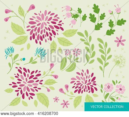Flowers, Plant - Set, Collection. Spring Mood. Summer Mood.  Vector Collection Of Summer Flowers In