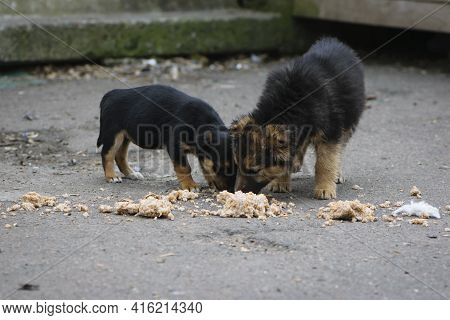 Pair, Two Black Puppies, Homeless Dogs. Two Abandoned Puppies, Eating Porridge On The Street. Loneli