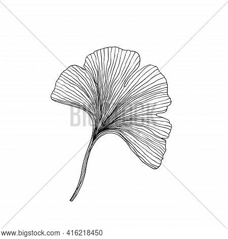 Simple Not Perfect Black Ginkgo Biloba Leaf Silhouette. Illustration Isolated On White. Hand Drawing