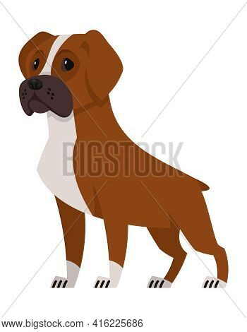 Standing Boxer Dog. Beautiful Pet In Cartoon Style.