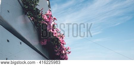 Wooden White Veranda With Pink Flowers Of A Summer Cafe On The Beach. View Of The Blue Sky On A Summ