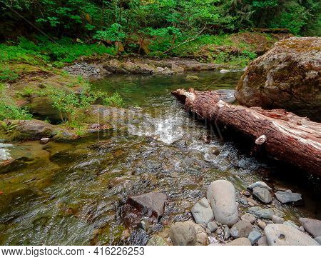 Wilderness Waterway - A Section Of The Blue River - Near Blue River, Or