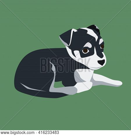 Little Black And White Dog Like Jack Russel Terrier In The Flat Style Vector Illustration