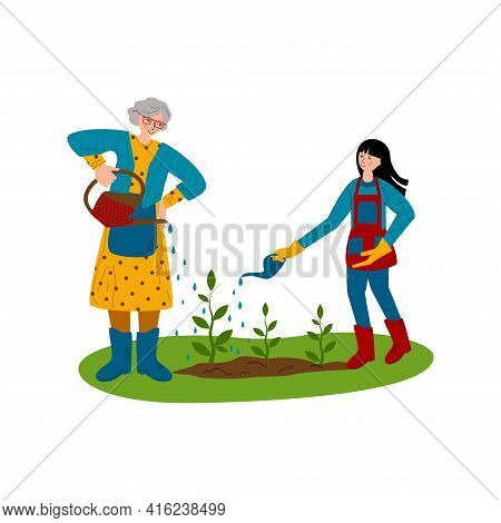 Grandmother And Granddaughter Are Working In The Garden, Watering Young Plants. Help For The Elderly