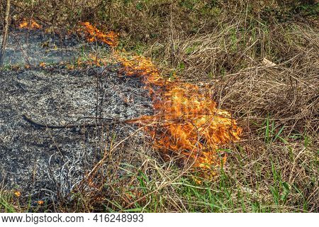 Dry Grass Burns With A Bright Flame After Arson. The Concept Of Careless Handling Of Fire