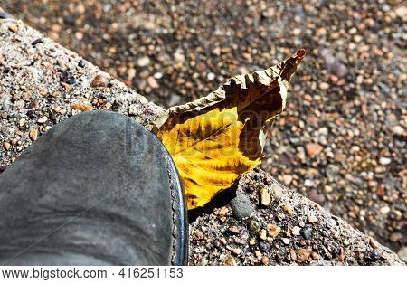 One Yellow Dry Autumn Leaf On The Ground Under The Foot. Autumn Fall Concept.