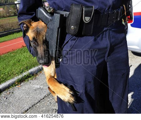 A Trained Police Dog Or K-9 Unit
