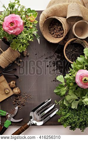 Gardening tools, watering can, seeds, plants and soil. Garden tools with seedlings. spring in the garden