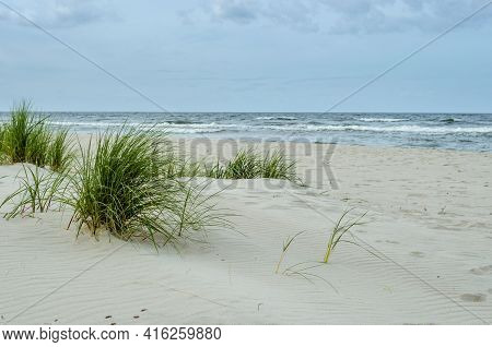 Sandy Beach In Krynica Morska On The Baltic Sea, Grass On The Sandy Beach