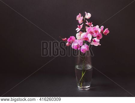 Purple Orchid In Glass Vase On Dark Background. View With Copy Space.