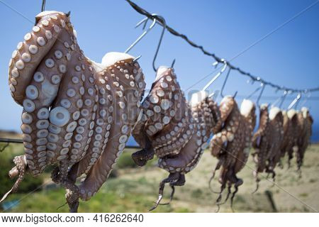 Oregano-rubbed Octopus Tentacles Drying In The Sun Outside Of Seaside Tavernas Are A Surprisingly Co