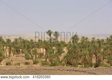 Arid And Hot Day In An Oasis In The Desert Of Sahara, Near Tata In Morocco.