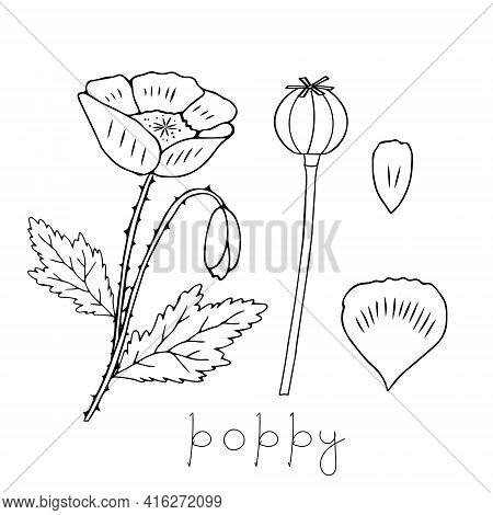 Vector Illustration Of One Black Common Poppy Flower Isolated On A White Background With Lettering P