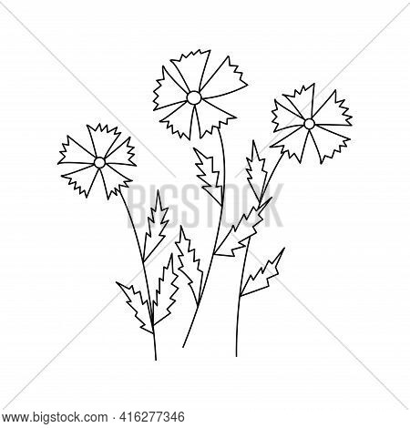 Cornflowers. Three Wildflowers. Black And White Vector Doodle Style Illustration