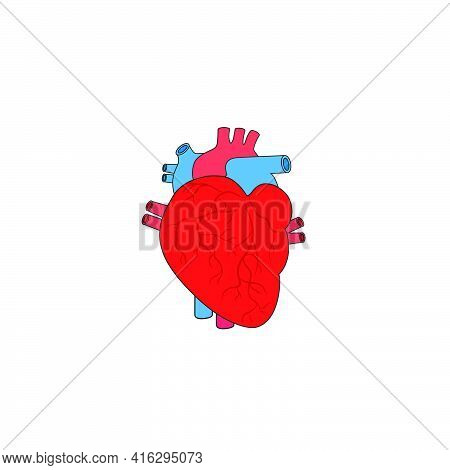 Modern Minimalistic Human Heart Icon Vector. Simple Heart Sign For Human Anatomy, Medical Or Healthc