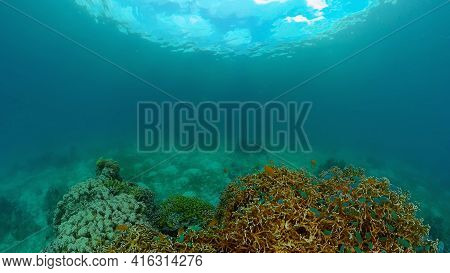 Coral Reef Underwater With Fishes And Marine Life. Coral Reef And Tropical Fish. Philippines.