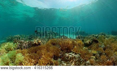 Marine Life Sea World. Underwater Fish Reef Marine. Tropical Colourful Underwater Seas. Philippines.