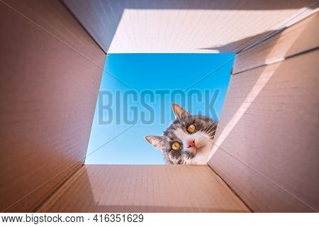 Funny Playful Cat Looking In Cardboard Box. Cat Loves To Play With Carton Box