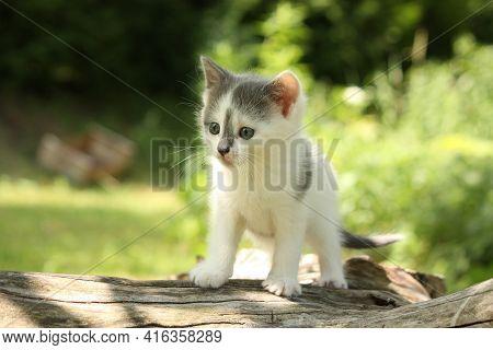 Gray Kitten Sitting On The Tree Branch