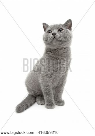 Small Kitten Sits On A White Background