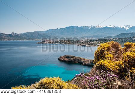The Citadel Of Calvi In The Balagne Region Of Corsica With Pink And Yellow Flowers In The Foreground