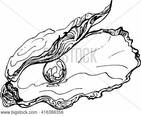 Sketch Oyster With Pearl. Hand Drawing Illustration.vector
