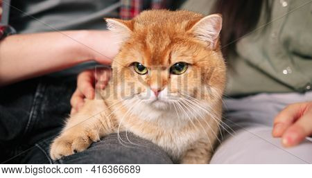 Close Up Of Fluffy Cute Cat Indoor In Male And Female Hands. Pet Animal Concept, Cat Love, Caring Ow