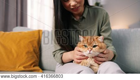 Close Up Of Beautiful Caring Asian Woman Sitting On Sofa In Cozy Room And Holding Lovely Fluffy Cat