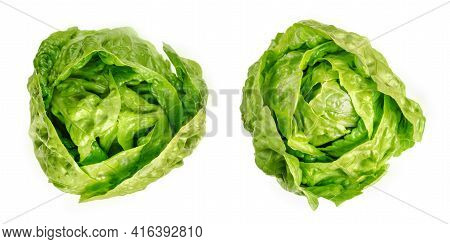 Two Romaine Lettuce Hearts, From Above. Cos Lettuce, Tall Lettuce Heads Of Sturdy Dark Green Leaves