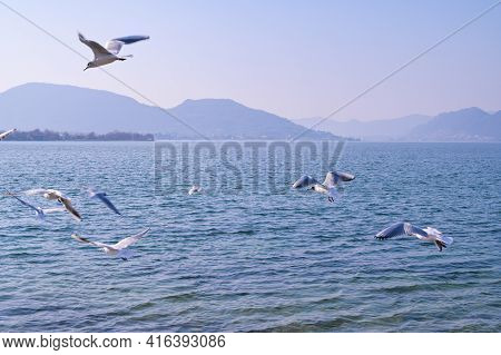 Seagulls Soar Over The Lake And Mountains On The Horizon. Beautiful Nature And Birds. Copy Space.