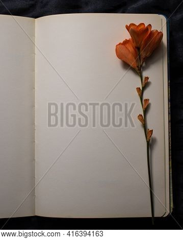 Top View Of Empty Blank Page Of Open Notebook With Orange Freesia Flower Against A Black Textured Ba