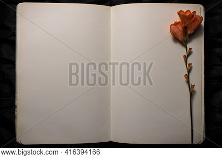 Open Book With Orange Freesia Flower Resting On Empty Blank Page Against A Black Background. Empty S