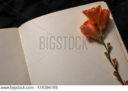 Close-up Of Orange Freesia Flower Resting On Top Of Empty Page Of Notebook On A Black Background. Em