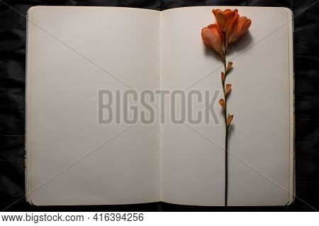 Top View Of Open Book With Orange Freesia Flower Resting On Top Of Empty Blank Pages On A Black Text