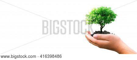 Human Hands Holding A Tree On White Background