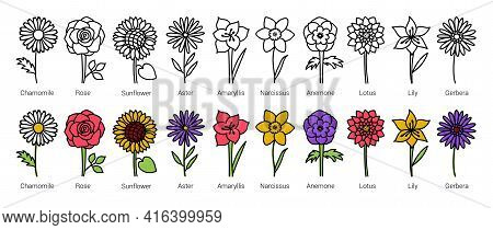 Flowers. Doodle Vector Set. Hand Drawn Line Sketch Floral Collection. Types Of Flowers With Names. C