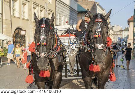 Krakow Poland August 2020. Horse Portrait, Krakow, Old Town, Lesser Poland Poland