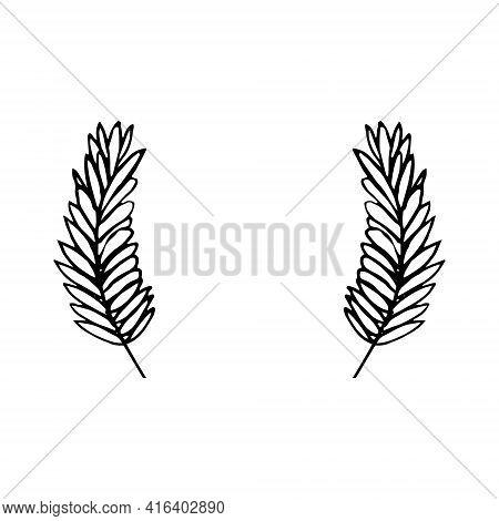 Spikelet Frame Border. Hand Drawn Doodle Style. Vector, Minimalism, Monochrome, Sketch Grain Harvest