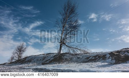 On A Snowy And Icy Hill There Are Bare Deciduous Trees. Branches Against A Blue Sky With Cirrus Clou