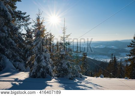 Fascinating Sunny Landscape Of A Winter Forest Located On A Snowy Slope On A Sunny Frosty Winter Day